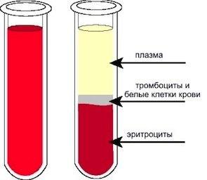 Витамин рус